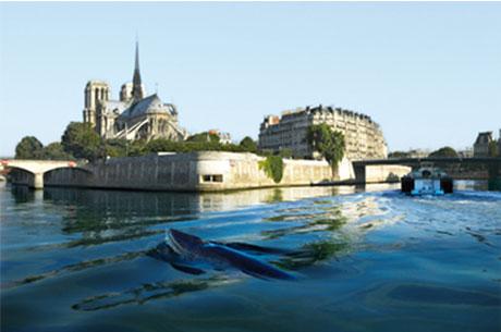Poisson g�ant Seine