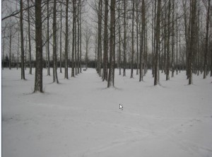 photos-toulouse-neige-4